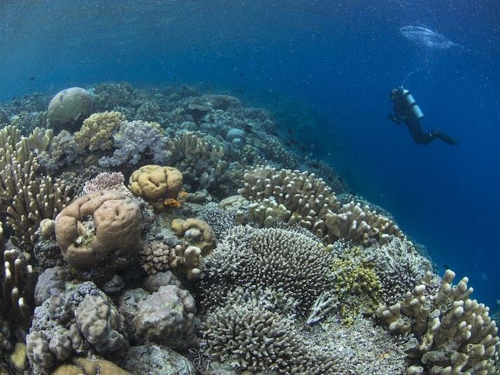 Terumbu Karang di Sulawesi Ini Ditemukan Tahan Pemanasan Global