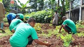 Manfaatkan Tanah Indonesia Untuk Terapi Bercocok Tanam