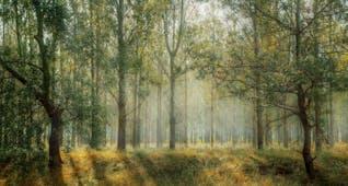 Gambar sampul Prasasti Katiden, Bukti Penegakan Konservasi Alam pada Era Majapahit