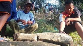 Temuan Seperti Fosil Stegodon di Ngawi