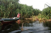 Merekam Alam dan Kehidupan Lewat Festival Film Lingkungan Borneo