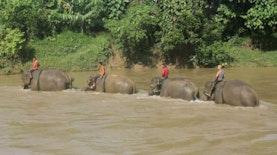 Membanguni Harmonisasi Manusia dan Gajah di Aceh