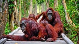 Satu-satunya Destinasi Bali Baru Diajukan Dari Kalimantan