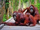 Gambar sampul 10 Keajaiban Alam Indonesia Wajib Dikunjungi Versi Lonely Planet