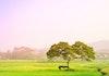 Pohon Pengantin Salatiga, Pohon Kesepian Penyatu Dua Insan