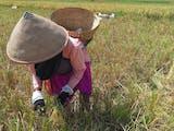 Gambar sampul Berkarya Sekaligus Menjaga Tradisi Lewat Festival Ngani-ani Delanggu