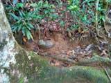 Tempayan Soya Gunung Sirimau, Wadah yang Selalu Terisi Air Secara Gaib