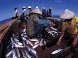 Gambar sampul Kerjasama Indonesia dan Amerika  Perkuat Promosi Sektor Perikanan