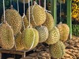 Durian Dapat Dimanfaatkan untuk Teknologi Fastcharging