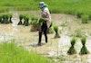 Tuntunan untuk Para Petani ini Sudah Ada Sejak Dahulu (I)