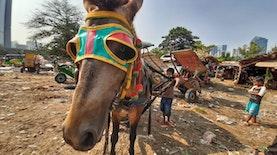 Ini Dia Nama Lain Delman di Beberapa Wilayah Indonesia