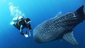 Hanya Ada Dua Pusat Pelatihan Biodiversitas Kelautan di Dunia, Salah Satunya di Indonesia