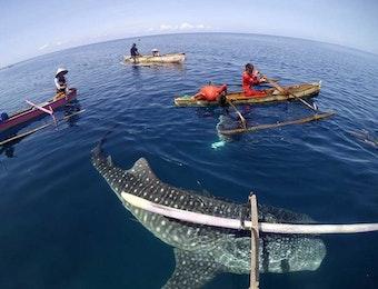 Menjaga Populasi Hiu, Menjaga Masa Depan Indonesia