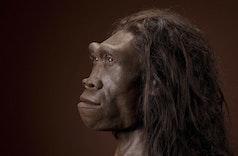 Perjalanan Terakhir Homo Erectus di Tanah Jawa