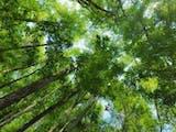 Gambar sampul Masyarakat Aceh Gencarkan Perlindungan untuk Hutan Lindung