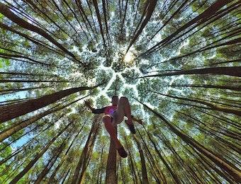 """Hutan Pinus Mangunan yang Hebohkan Situs """"Dagelan"""" Dunia"""
