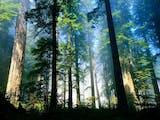 Gambar sampul 6 Taman Nasional di Indonesia Sebagai Situs Warisan Dunia UNESCO