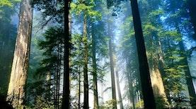 6 Taman Nasional di Indonesia Sebagai Situs Warisan Dunia UNESCO