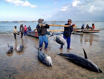 Menteri Perikanan dan Kelautan Resmikan Lima Proyek di Sulut
