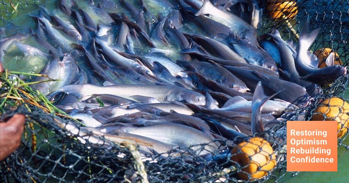 5 Ikan Yang Biasa Di Budidayakan Di Indonesia