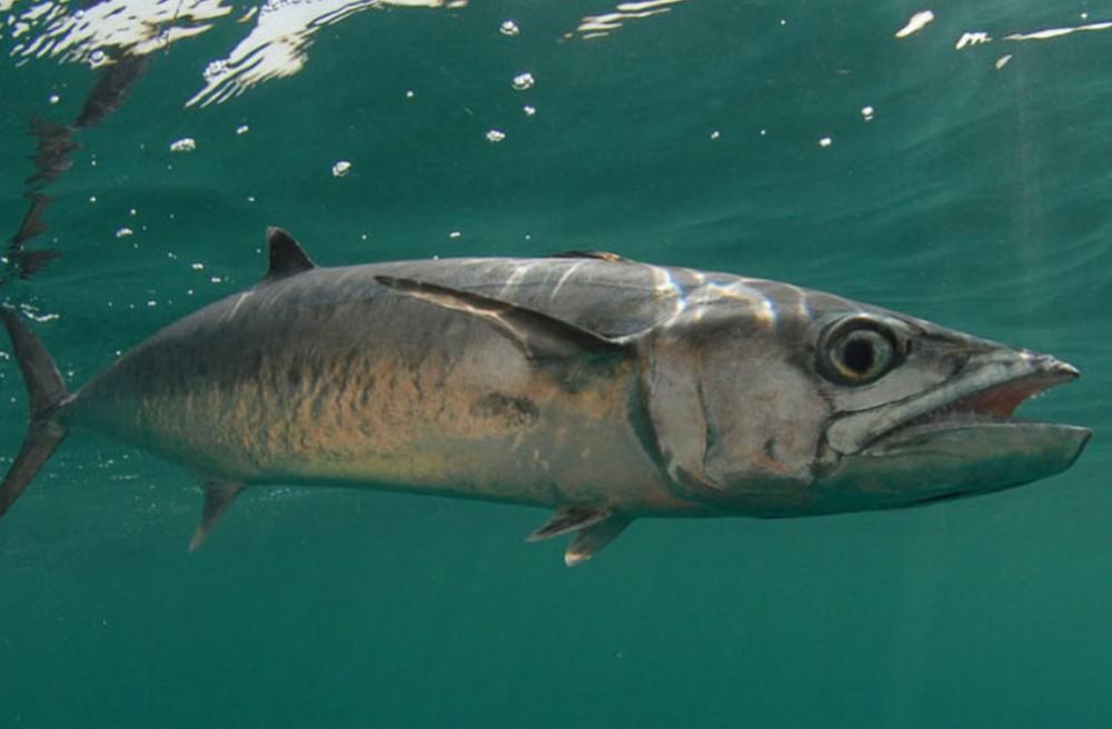 Download 54+ Gambar Ikan Untuk Terbaru