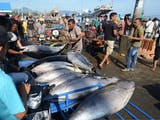 Gambar sampul Lokasi Ternak Tuna Terbaik Dunia Ada di Indonesia