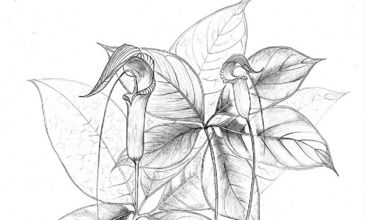 Doktor ITB Raih Penghargaan Sebagai Salah Satu Ilustrator Botani Terbaik Dunia