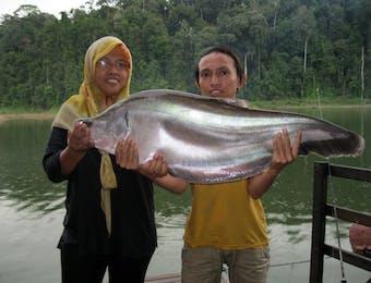 Begini Usaha Kementerian Kelautan dan Perikanan Selamatkan Ikan Belida
