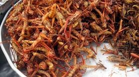 Cemilan Serangga dan Rahasia Fantastis di Baliknya