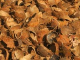 Gambar sampul Ini Terumbu Karang Buatan Ramah Lingkungan & Murah dari Tempurung Kelapa