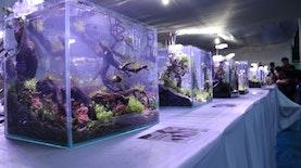 Seni, Eksotisme dan Potensi Perikanan Indonesia di Aquaculture Festival