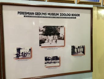 125 Tahun Hadir, Inilah Kegiatan Dari Museum Zoologi Bogor