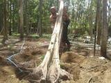 Gambar sampul Wisatawan Asing Rayakan Natal di Lombok dengan Lakukan Tanam Pohon