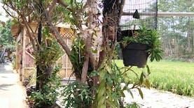 Semerbak Wangi Anggrek di Kampung Budaya Polowijen