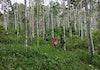 Cerita dari Hutan: Ketika Batang Toru Merayu