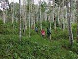 Gambar sampul Cerita dari Hutan: Ketika Batang Toru Merayu