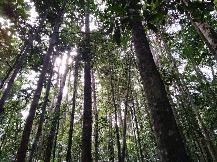 Cerita dari Hutan: Mengetuk Pintu Batang Toru