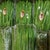 Petani Baby Buncis Desa Cibodas Tembus Pasar Singapura