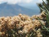 Gambar sampul 5 Gunung Dengan Ladang Edelweiss di Indonesia