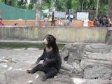 Inilah Juliet Penghuni Baru Kebun Binatang Serulingmas