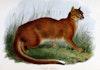 """Bukan """"Kucing Oren"""", tapi Kucing Inilah yang Asli Indonesia"""