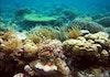 Indahnya Taka Bonerate, Taman Nasional dengan Atol Terbesar Ketiga di Dunia