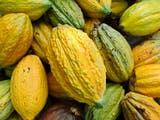 INDONESIA A 'SLEEPING GIANT' IN COCOA