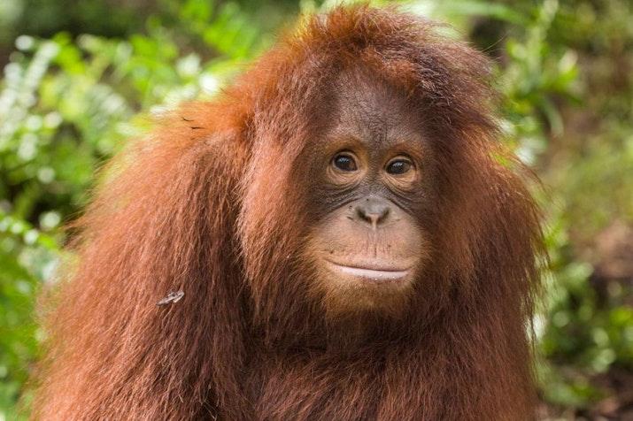 Inilah Kebun Binatang Pertama di Indonesia