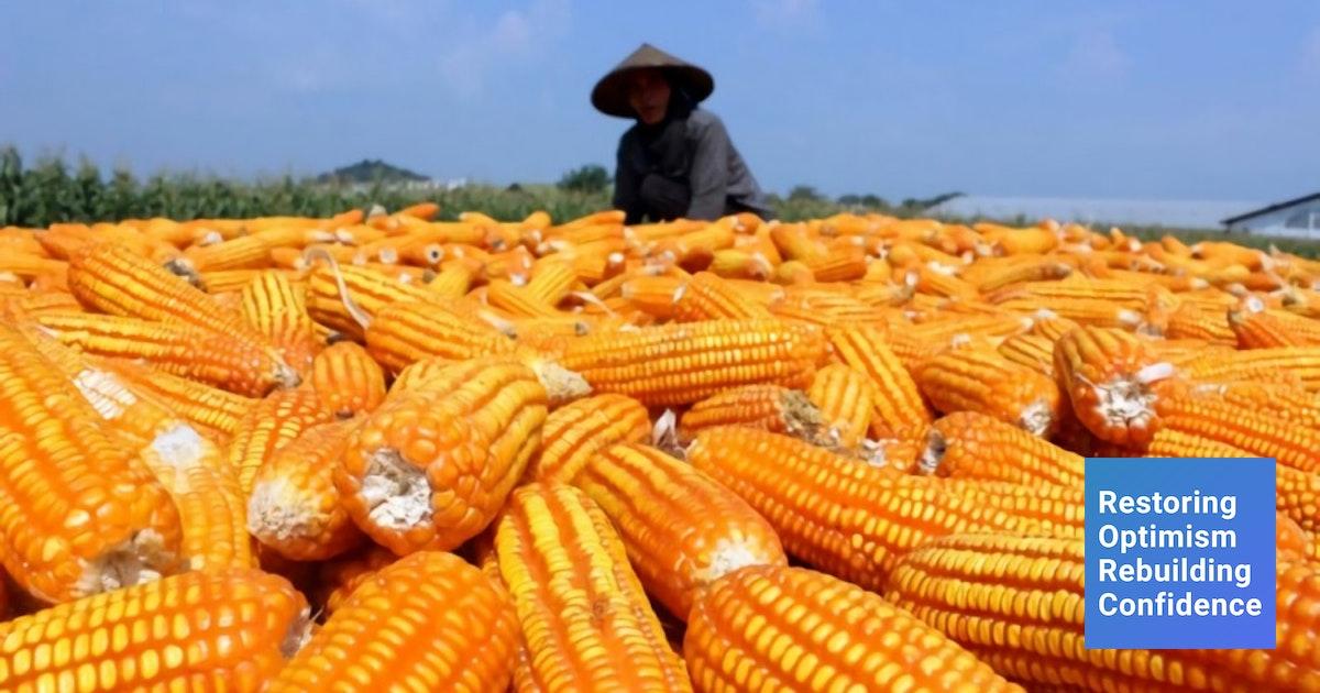 Melirik Produksi Dan Potensi Jagung Sebagai Produk Ekspor
