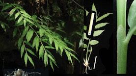 Di Sela-sela Hutan Batu, Jahe Jenis Baru Ditemukan Para Ilmuwan