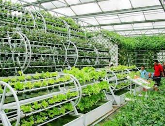 Inikah Solusi Agar Generasi Muda Indonesia Gemar Bertani?