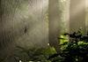 Jaring Laba-laba Terbesar di Dunia dan Padi, apa hubungannya?