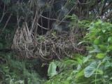 Gambar sampul Jembatan Ini Terbuat Dari Akar Pohon
