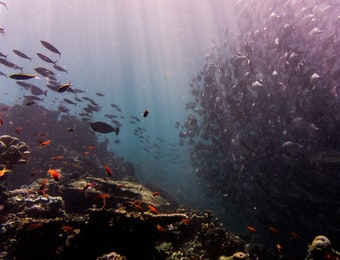 Festival Pesona Lipuku Angkat Kepulauan Togean Dengan Keindahan Lautnya!